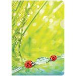 Папка-уголок А4 180мкм Ladybird рисунок